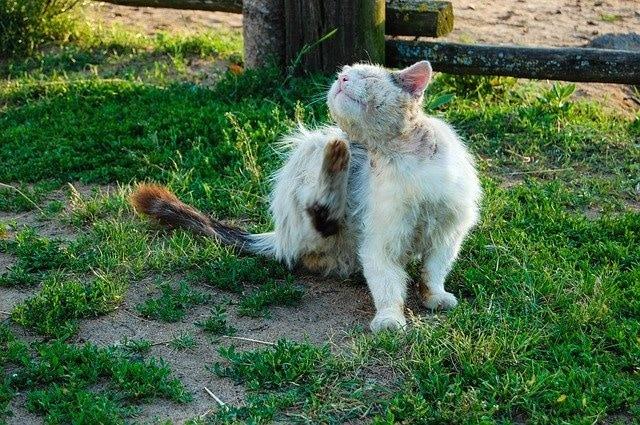 FIP bei Katzen