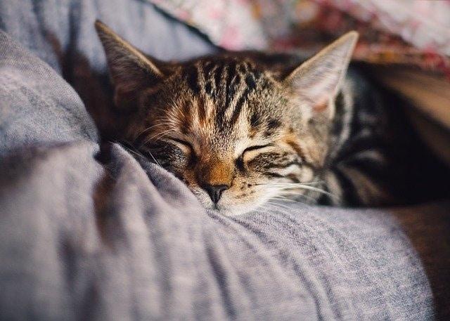 Was kann ich machen, wenn meine Katze Durchfall hat