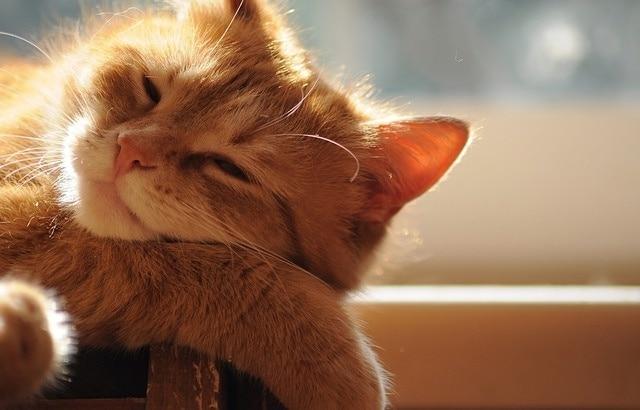 Katzen und Hitze – Tipps für heiße Tage