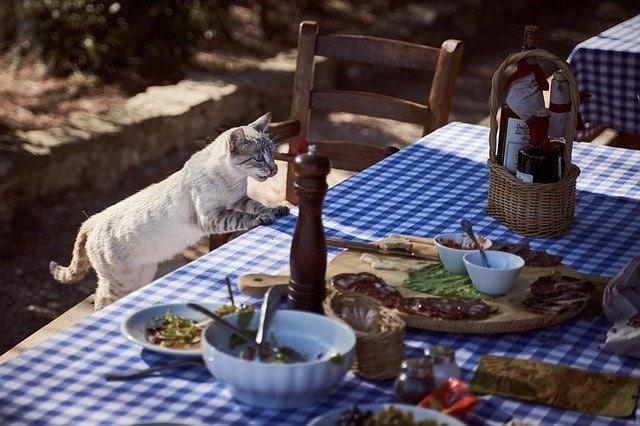 3 Dinge, die Katzen nicht fressen dürfen