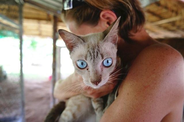 Asthma bei Katzen